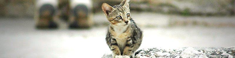 Legislação de Proteção aos animais