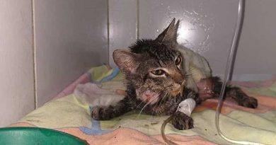 Crueldade: gata é esfolada viva e tem rabo cortado em Maceió