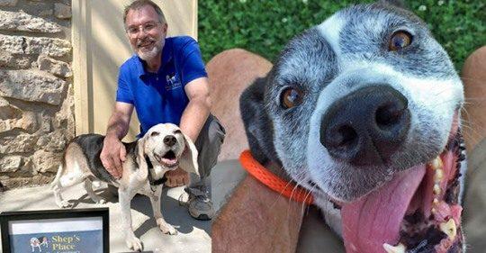 Homem abre orfanato para cães 'velhinhos' que foram abandonados
