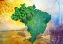 Investidores já classificam 2020 como o ano de maior otimismo da história brasileira