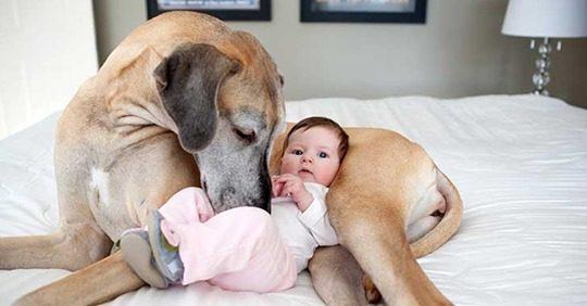 Cães de rua salvam bebê recém-nascida abandonada pela mãe