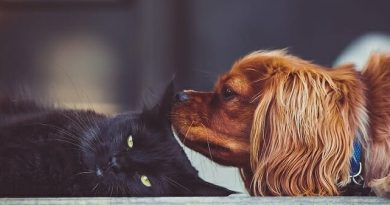 Austrália proíbe reprodução de cachorros e gatos para vendas em lojas