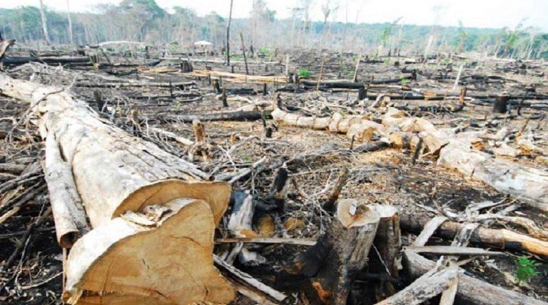 Governo Lula bateu recorde de desmatamento sob silêncio da mídia e de ONGs