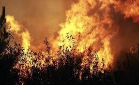Destruição Florestal aumenta 69% na Europa